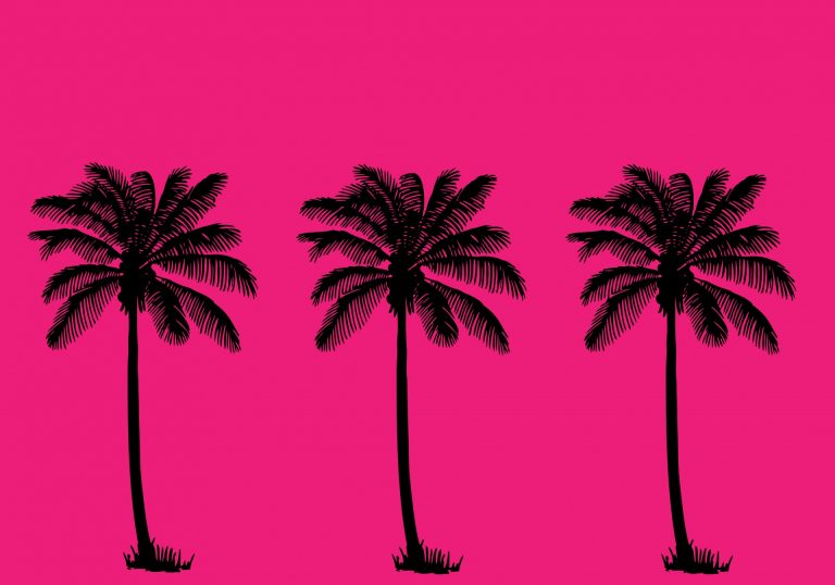 palm wallpaper 133